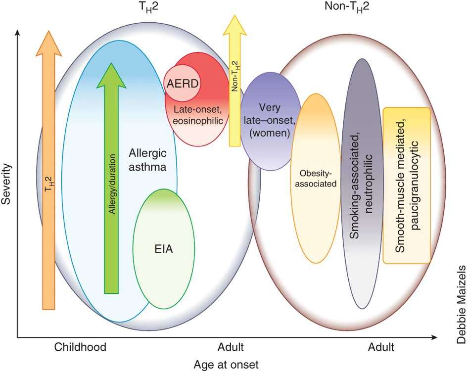 Asthma phenotypes Wenzel