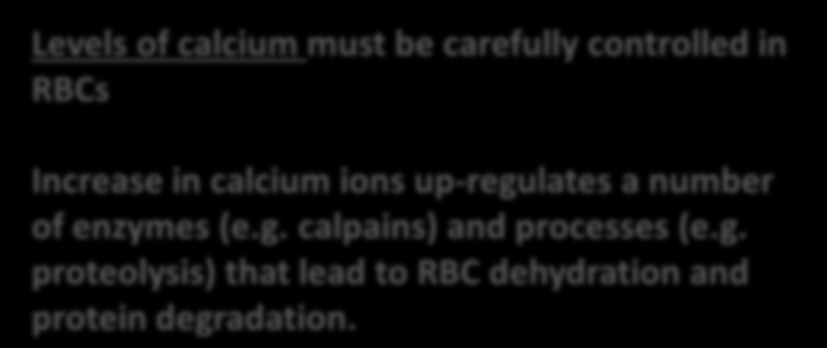 RBCs Increase in calcium ions up-regulates a number of enzymes (e.g. calpains) and processes (e.