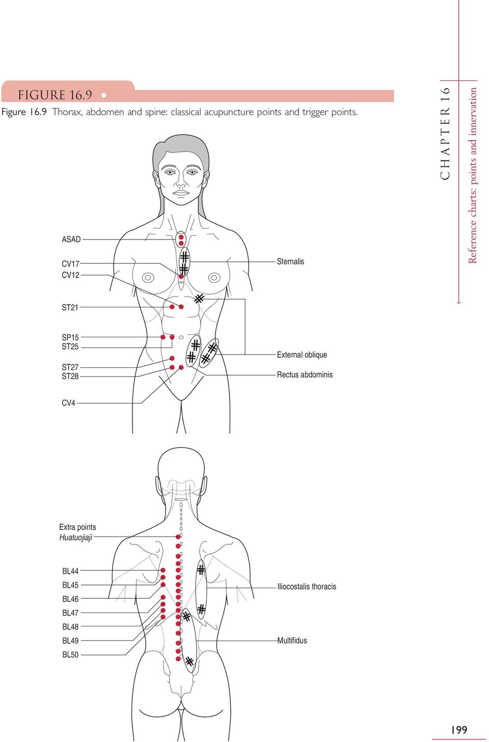 ASAD CV17 CV12 Sternalis CHAPTER 16 Reference charts: points and innervation ST21