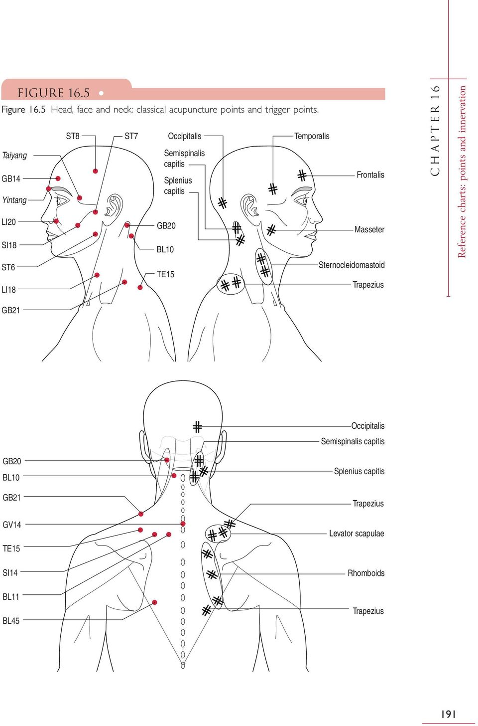 TE15 Temporalis Frontalis Masseter Sternocleidomastoid Trapezius CHAPTER 16 Reference charts: points and
