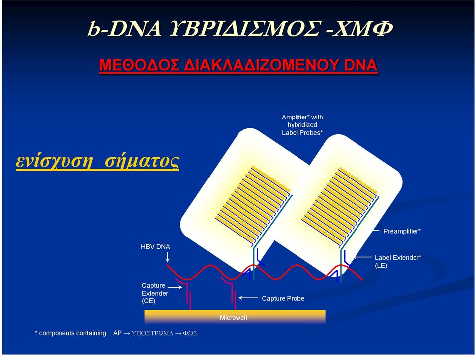 Preamplifier* ΗΒV DNA Label Extender* (LE) Capture Extender