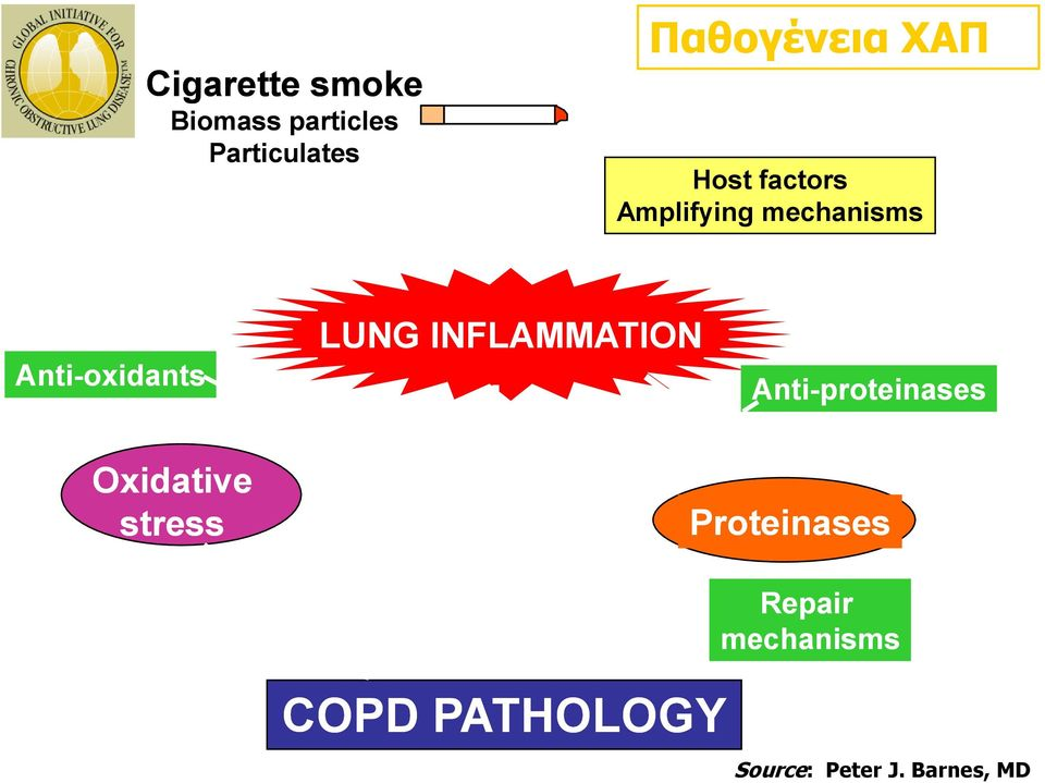 INFLAMMATION Anti-proteinases Oxidative stress Proteinases