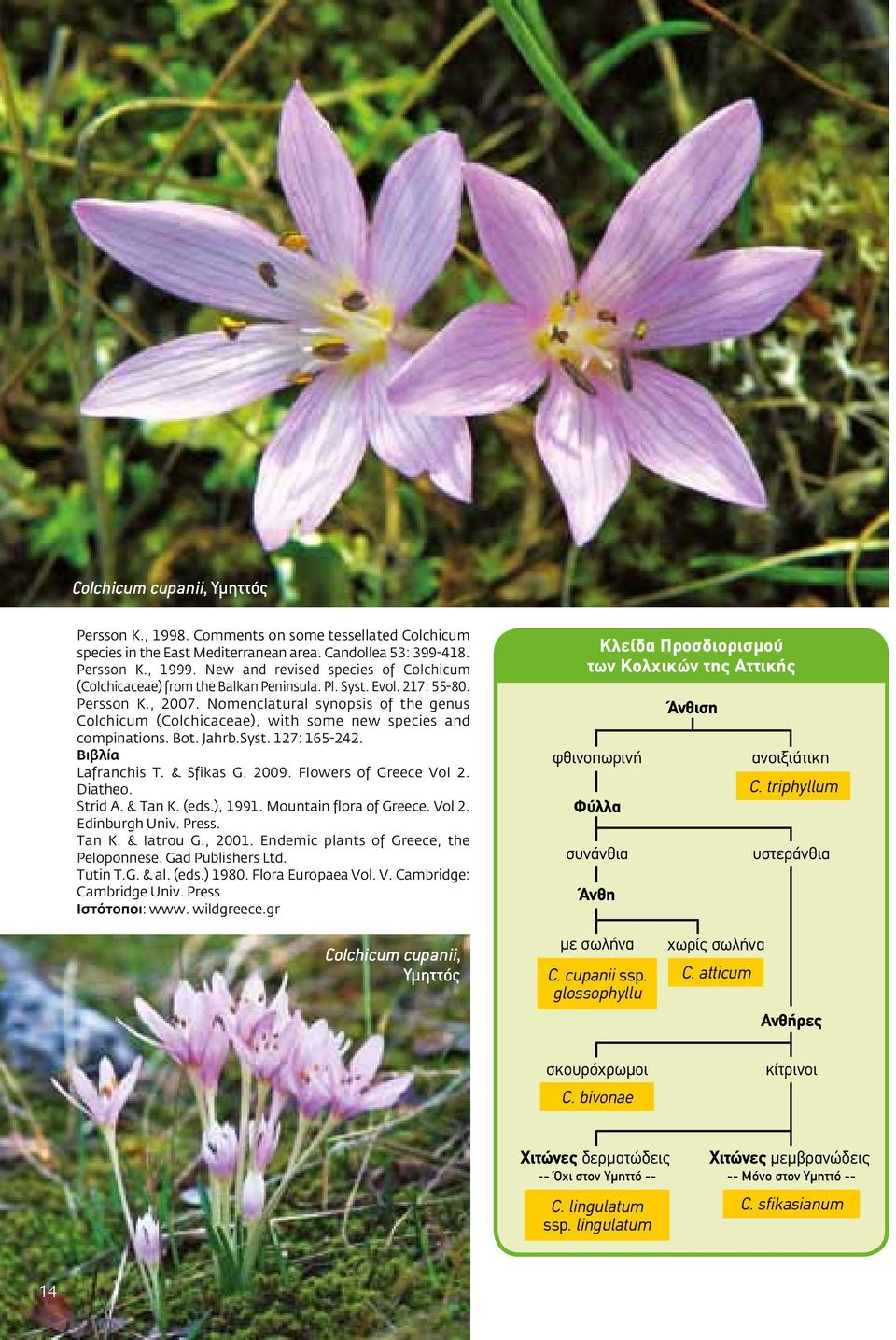 Nomenclatural synopsis of the genus Colchicum (Colchicaceae), with some new species and compinations. Bot. Jahrb.Syst. 127: 165-242. Βιβλία Lafranchis T. & Sfikas G. 2009. Flowers of Greece Vol 2.