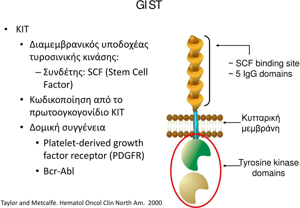 growth factor receptor (PDGFR) Bcr-Abl SCF binding site 5 IgG domains Κυτταρική