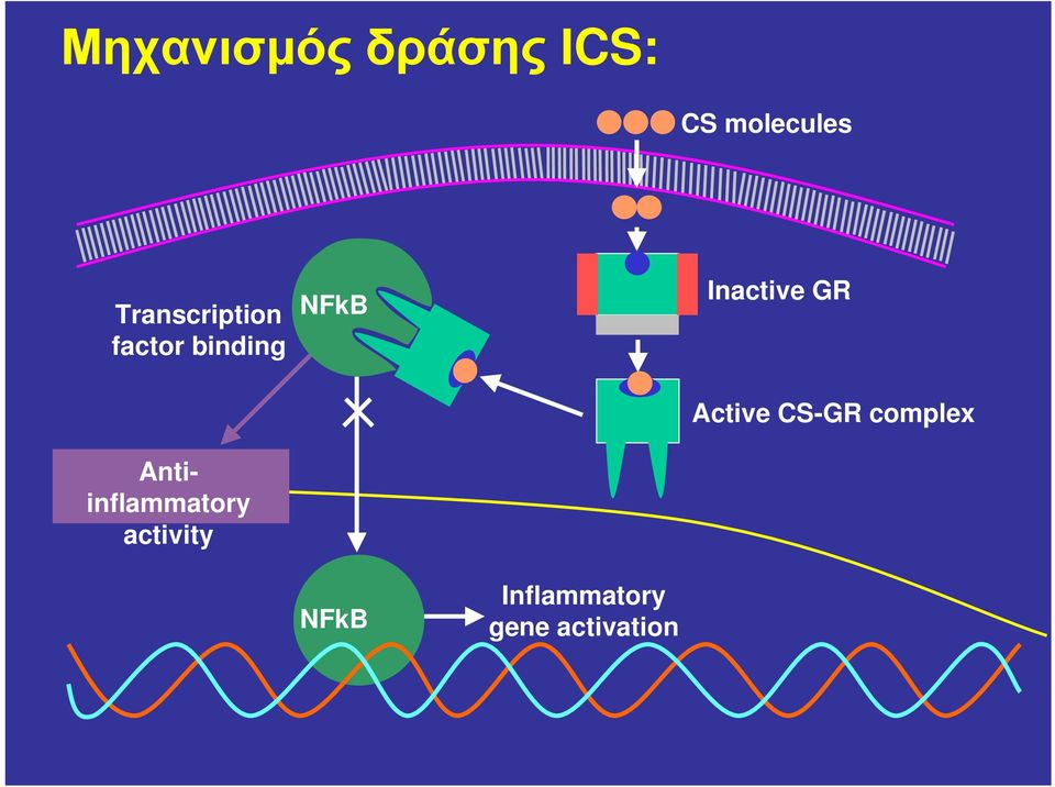 Inactive GR Antiinflammatory activity