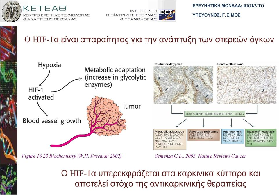 , 2003, Nature Reviews Cancer Ο υπερεκφράζεται στα