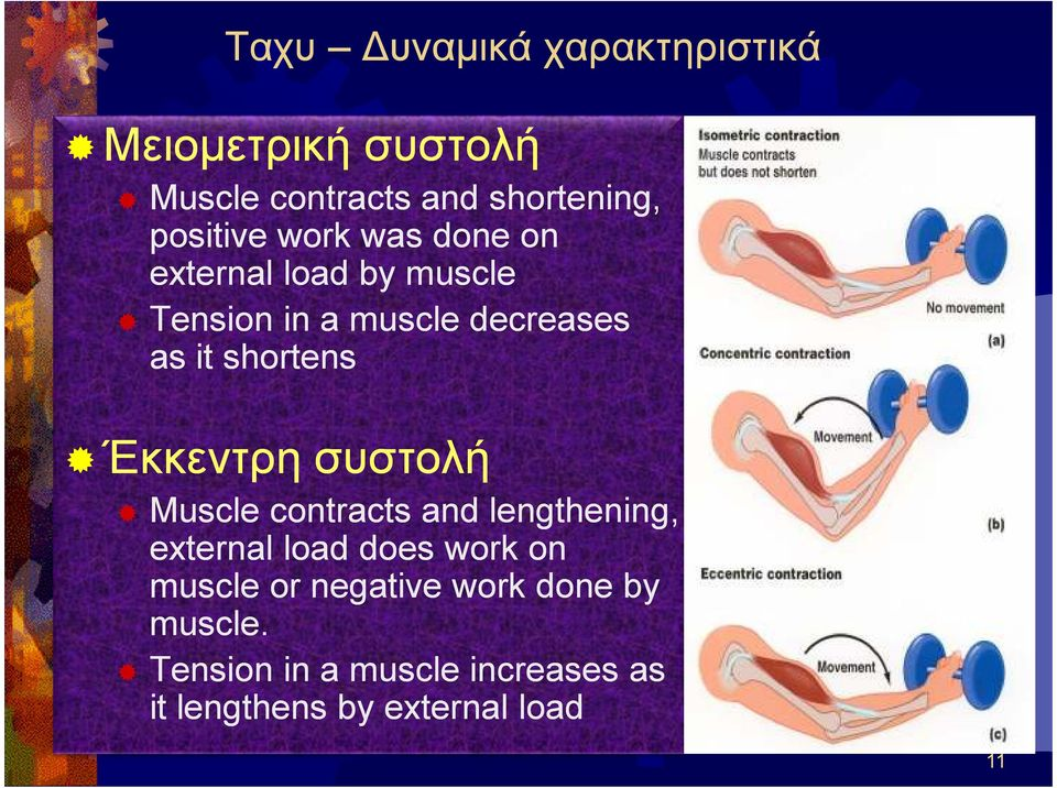 συστολή συστολή Muscle contracts and lengthening, external load does work on muscle or