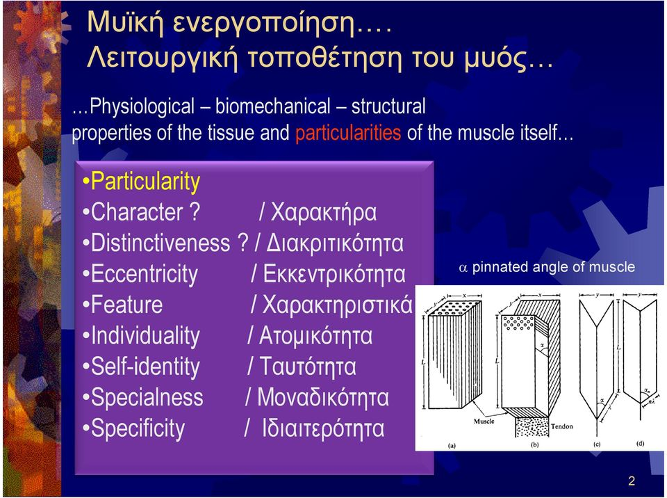 particularities of the muscle itself Particularity Character? / Χαρακτήρα Distinctiveness?