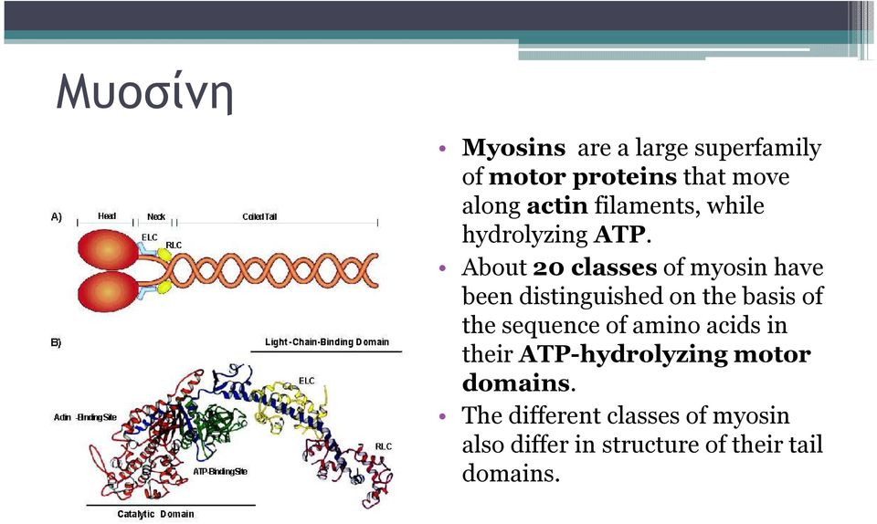 About 20 classesof myosin have been distinguished on the basis of the sequence