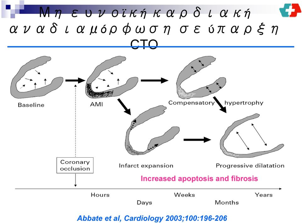 Increased apoptosis and