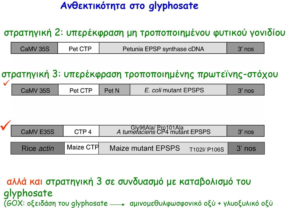 Maize CTP Maize mutant EPSPS T102I/ P106S 3 nos αλλά και στρατηγική 3 σε συνδυασμό με