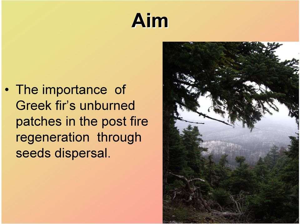the post fire regeneration