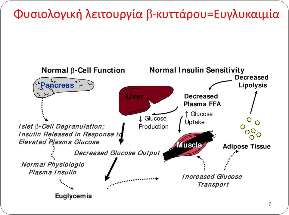 Insulin Euglycemia Liver Normal Insulin Sensitivity Glucose Production Decreased Glucose Output