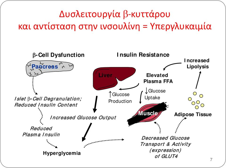 Reduced Insulin Content Increased Glucose Output Glucose Production Glucose Uptake Muscle Adipose