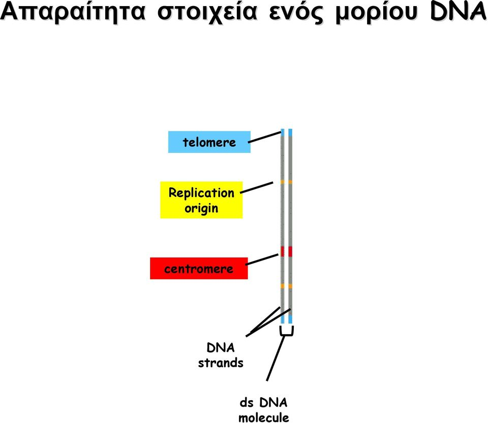 Replication origin