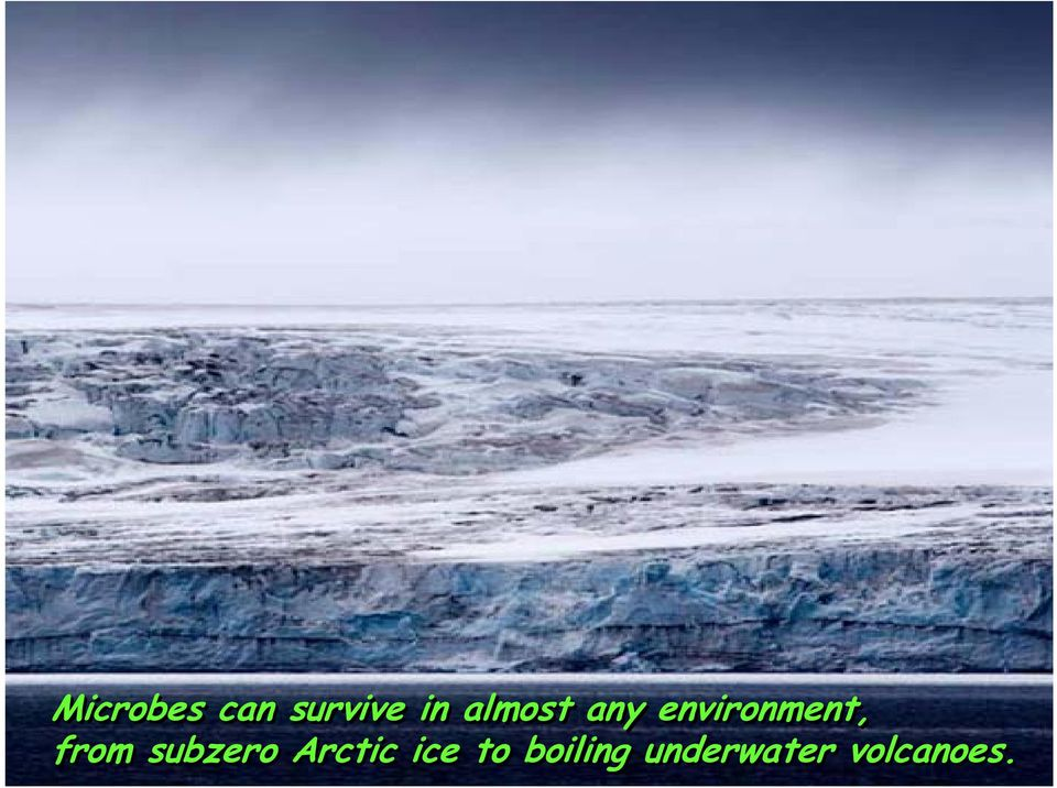 from subzero Arctic ice