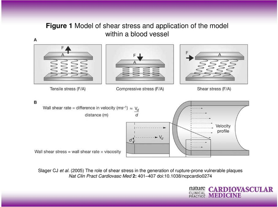 (2005) The role of shear stress in the generation of
