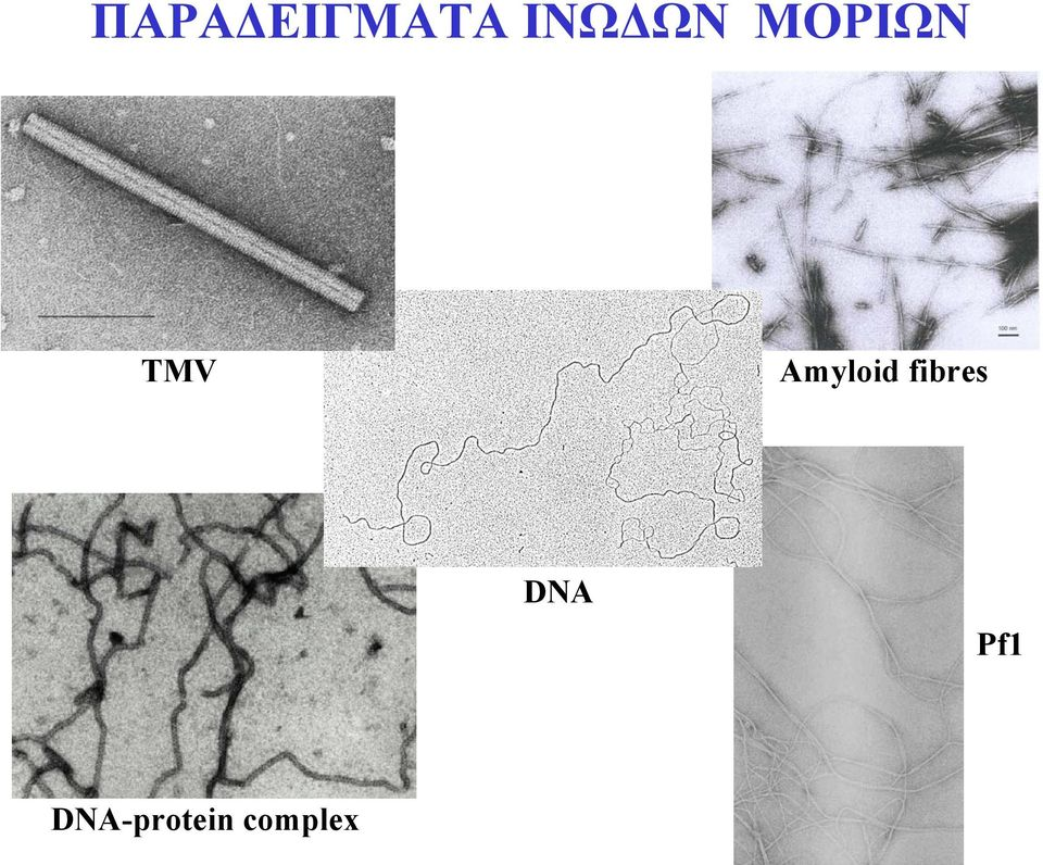 Amyloid fibres DNA