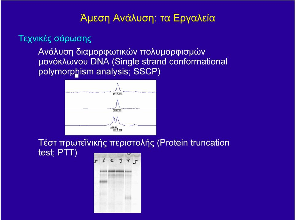 strand conformational polymorphism analysis; SSCP)