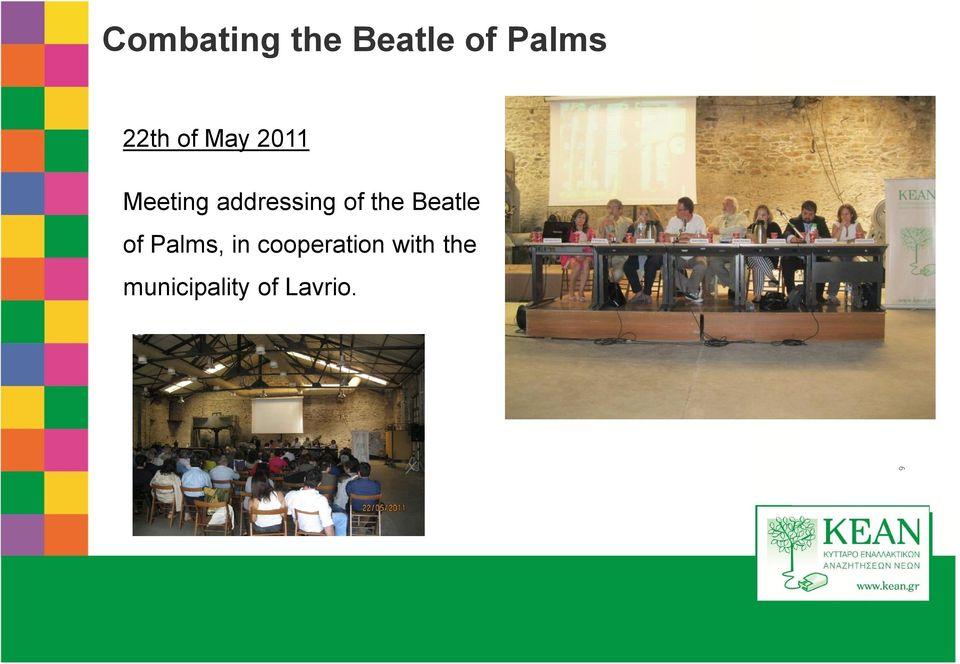 Beatle of Palms, in cooperation with